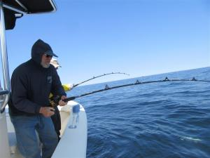 Rods are bent fishing Stellwagen Bank on Board Relentless Charters out of Green Harbor, MA
